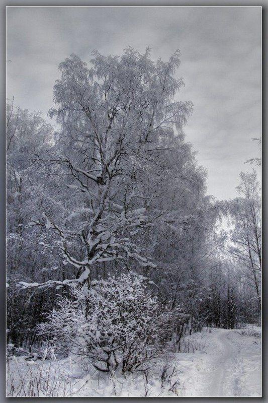 В морозном лесу...photo preview