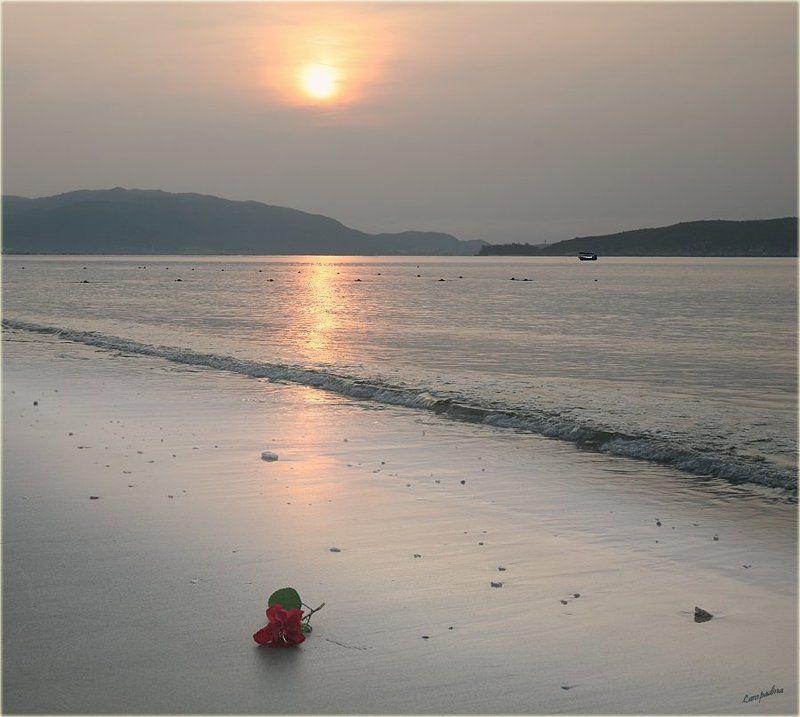 китай, хайнань, южно-китайское море, китайская роза, рассвет Китайские зарисовки. Китайская роза.photo preview