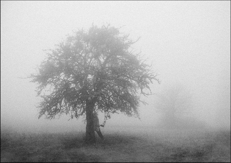 под деревомphoto preview