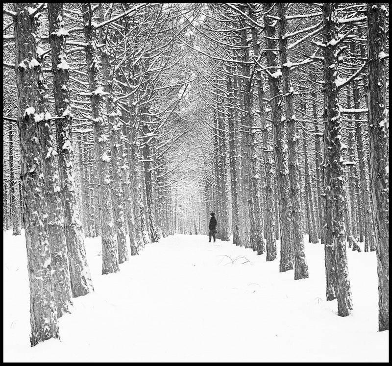 про лес и девушкуphoto preview
