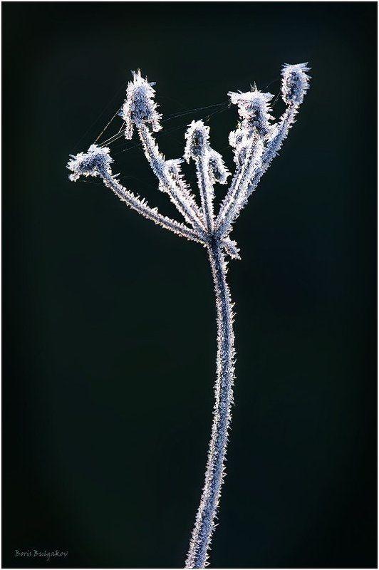 зима, зонтичное, иней Фейерверкphoto preview