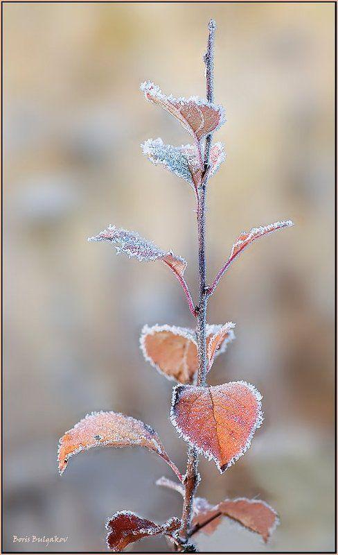 зима, веточка, иней Светлое настроениеphoto preview