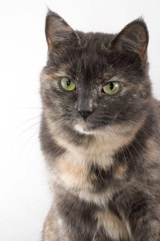 кошка, серая Ассолькаphoto preview