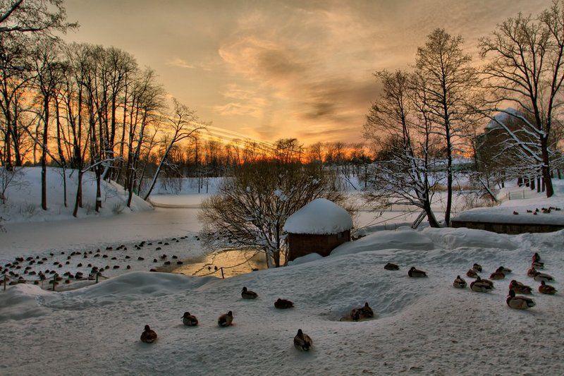 ораниенбаум,утки,зима У озера...photo preview