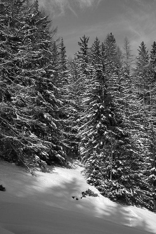черное, белое, лес, снег ***photo preview