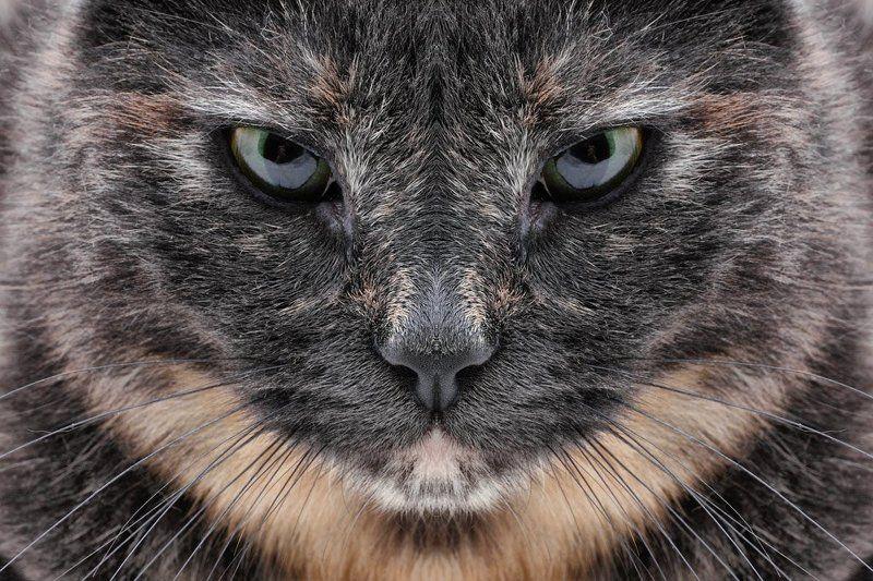 кошка, зеркальное отражение Ассолька - отражениеphoto preview