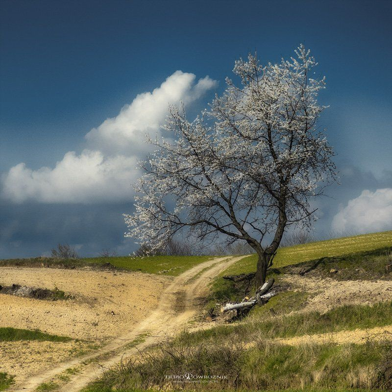 nature, landscape, tree, alone, spring, canon, rpowroznik lonely...photo preview