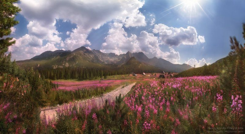Amazing, Beautiful, Beautifulpoland, Flowers, HalaG?sienicowa, HalaGasienicowa, Landscape, Landscapephotography, Landscapephotos, Landscape_captures, Mountains, Naturephotography, Photographer, Poland, Polishmountains, Tatry, Tatrymountains, Travel, Zakop Road of Lifephoto preview