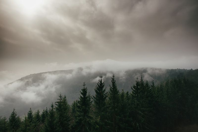 fog morning forest alone france lanscape land silent strasbourg Church otrott Mont-Sainte-Odile Land of Forestsphoto preview