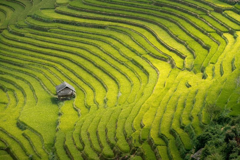 Rice terraces in Mu Cang Chai, North Vietnamphoto preview