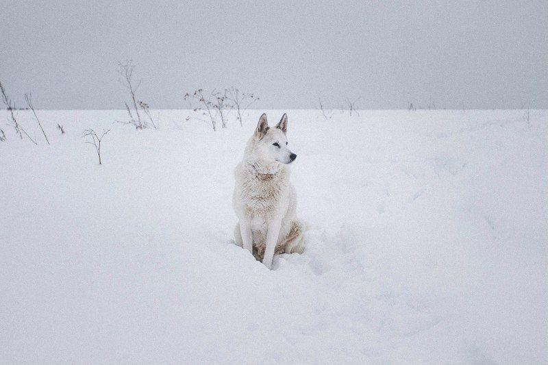 Белый клыкphoto preview