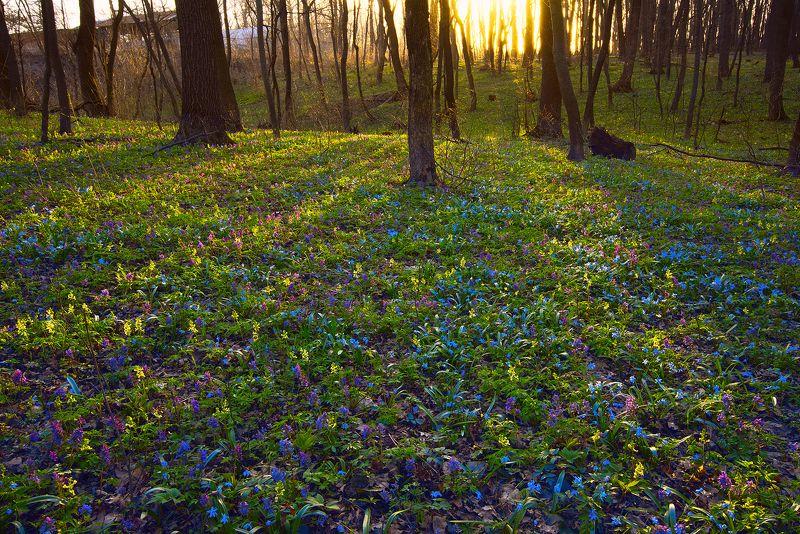 лес Весенний лесphoto preview
