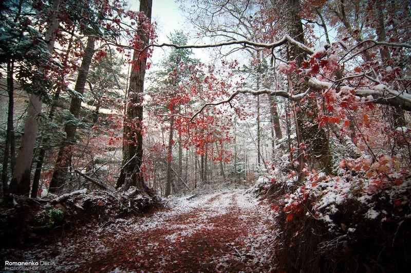 Примеряет лес зимний наряд.photo preview