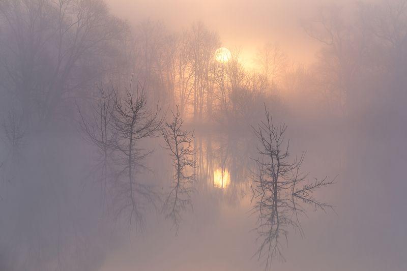 Владимирская область, Рассвет, Солнце, Туман, Храм покрова на нерли, Церковь Очарование туманного утраphoto preview