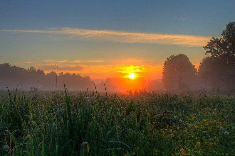 canon, лес, лето, пейзаж, природа, россия, солнце, туман В травеphoto preview