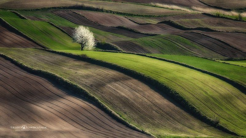 rpowroznik, canon, landscape, tree, spring, lonely, landscape lonely...photo preview