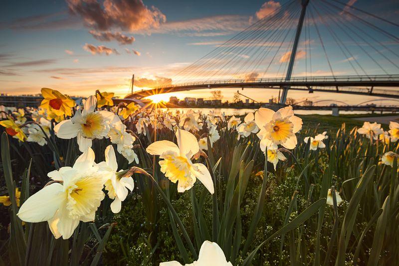 sun,flower,sunset Near the Sunphoto preview
