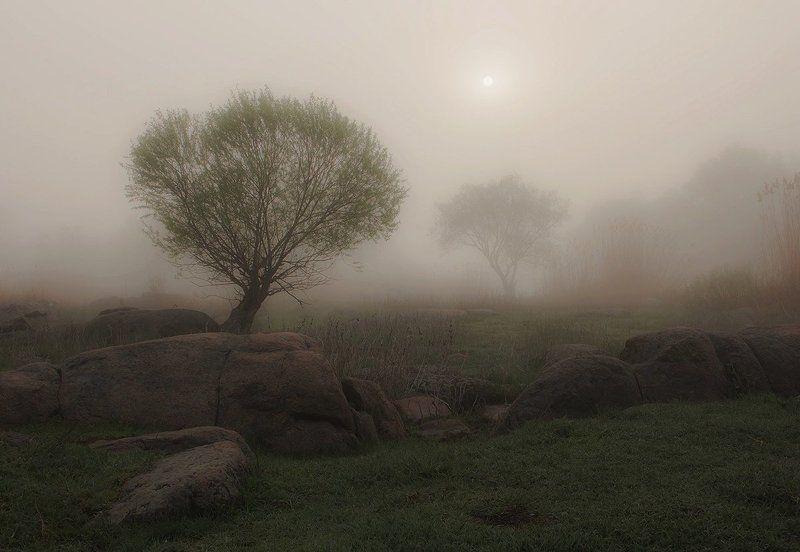 Утро. Туман. Деревья. Утро Бугского Гарда.photo preview