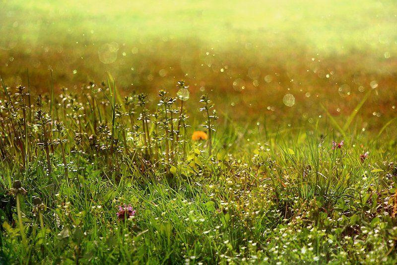 весна Утром..photo preview
