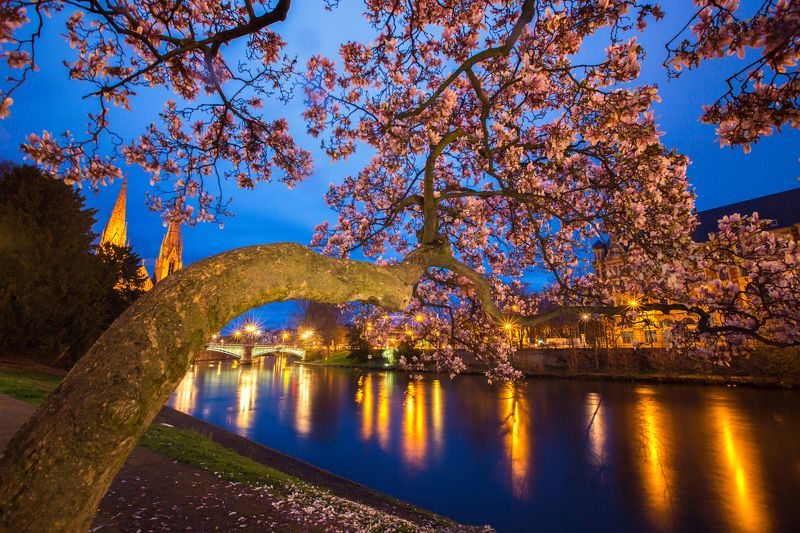 flower,tree,river,city,night Beauty Of The Nightphoto preview