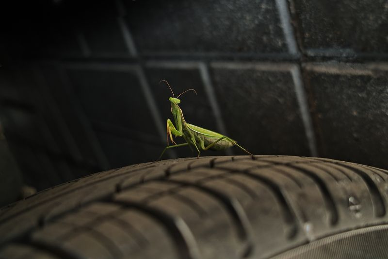 bug, auto, car, macro, wheel, mantis, religiosa, insect, beetle, green, protector, tire, tyre, black, travel, rubber, stone, pavement, roadway, street, road, greeting, live, portrait, yellow, predator, foveon, sigma, dp2, 50mm Hello!photo preview