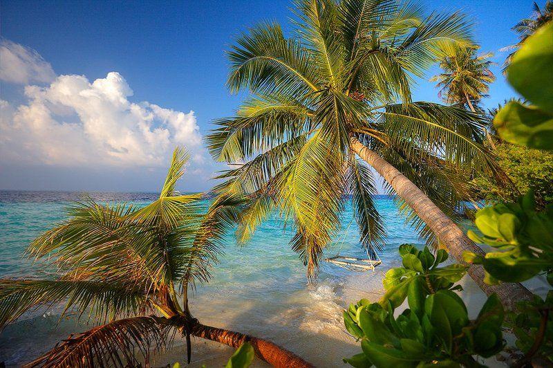 Индийский океан, Кокосы, Мальдивы, Пальмы, Цейлон, Шри-ланка Тропические зарисовкиphoto preview