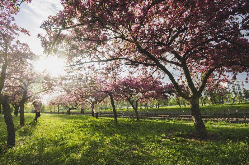 весна, город, природа, пейзаж, репортаж городской пейзажphoto preview