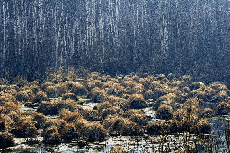 Нашествие из лесаphoto preview