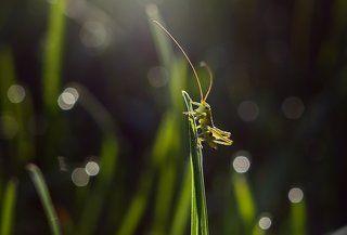 В траве сидел...