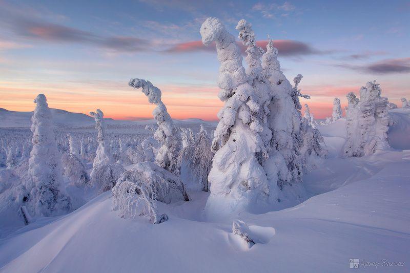 ГУХ, Главный Уральский Хребет, зима, горы, рассвет, тайга Когда тайга бывает нежнойphoto preview