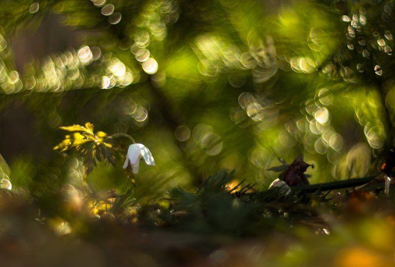 На весенней полянке.photo preview
