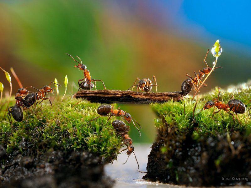 Ants Пикник у ручьяphoto preview