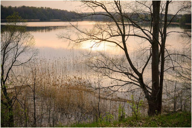 Баклановское озеро, Весна, Вечер, Красивый вечер, Май, Национальный парк, Озеро, Отражение, Панорама, Пейзаж, Природа, Розовый закат, Смоленское Поозерье над озеромphoto preview