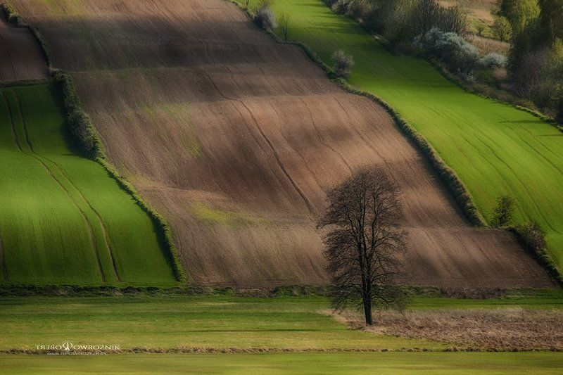 landscape, fields, tree, light, rpowroznik, canon fields...photo preview