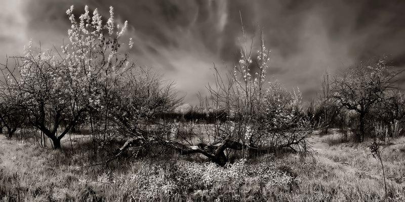 Сад. Инфракрасные панорамыphoto preview
