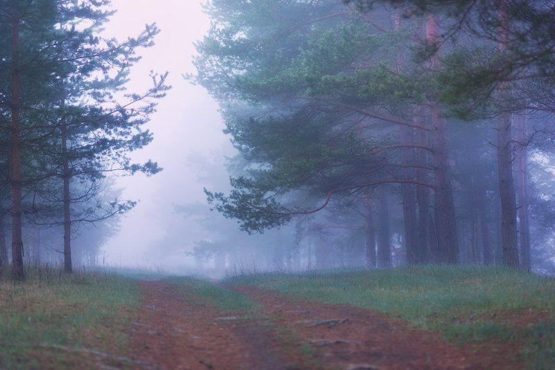 Смоленская область, Западная Двина, май, утро, туман, сосны Майские мгновения или История одного весеннего утраphoto preview