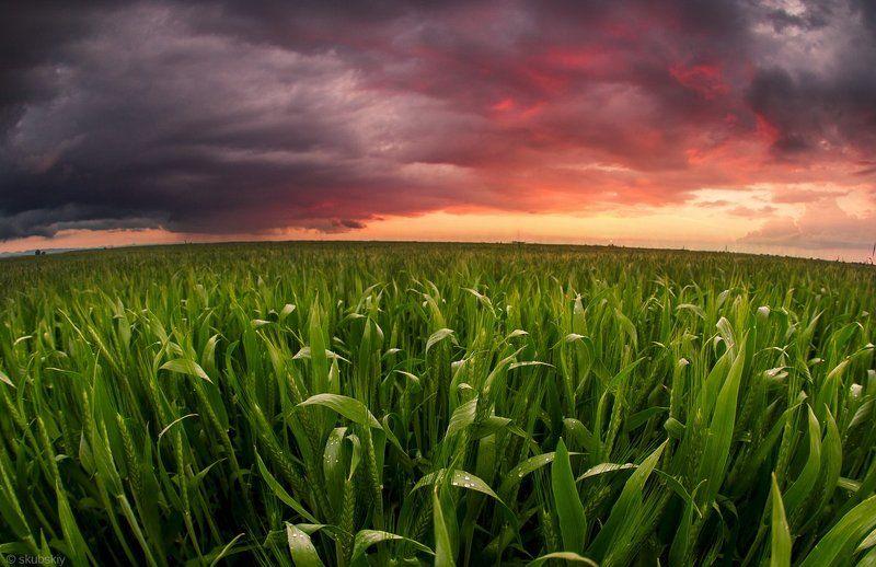 поле, закат Урожай 2016photo preview