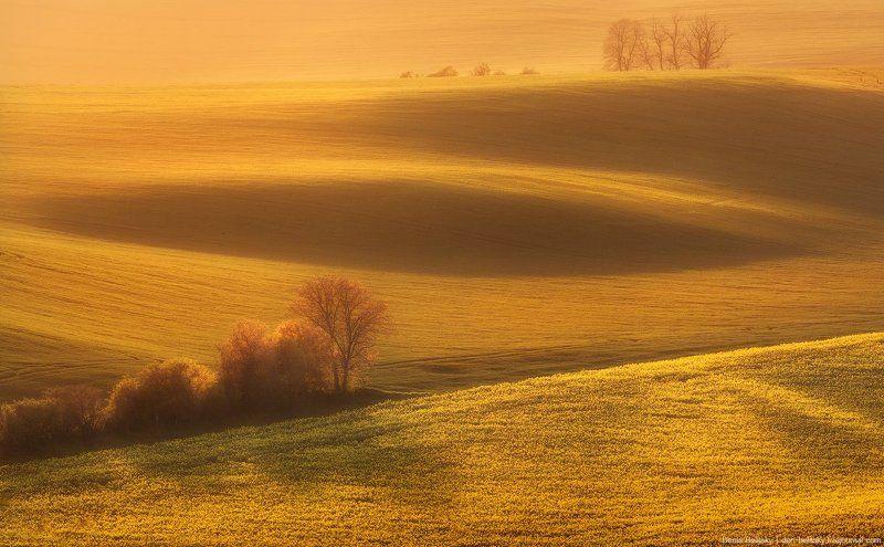 Пейзаж, Чехия, Моравия, Южная, поле, закат, свет, рапс, цветы, холм Закат на полях Южной Моравии (Чехия)photo preview