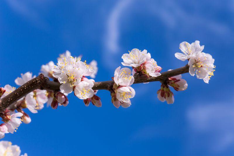 москва Краски весныphoto preview