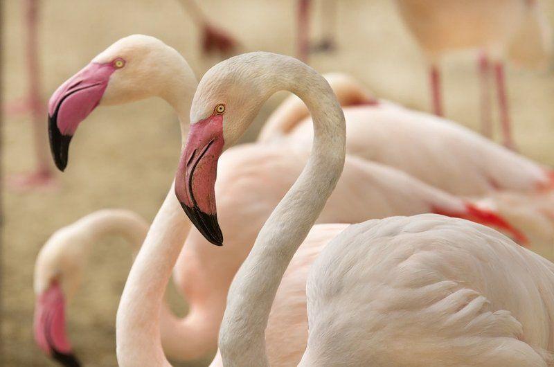 Розовый фламинго.photo preview