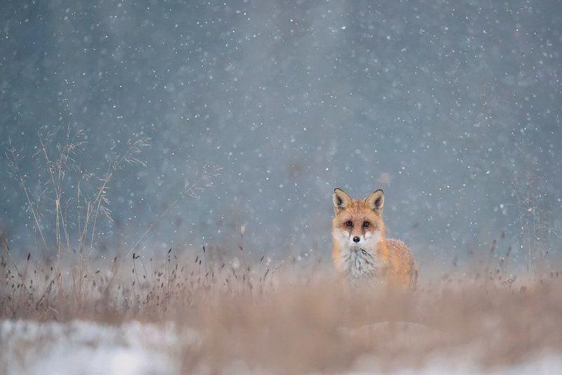 W śnieguphoto preview