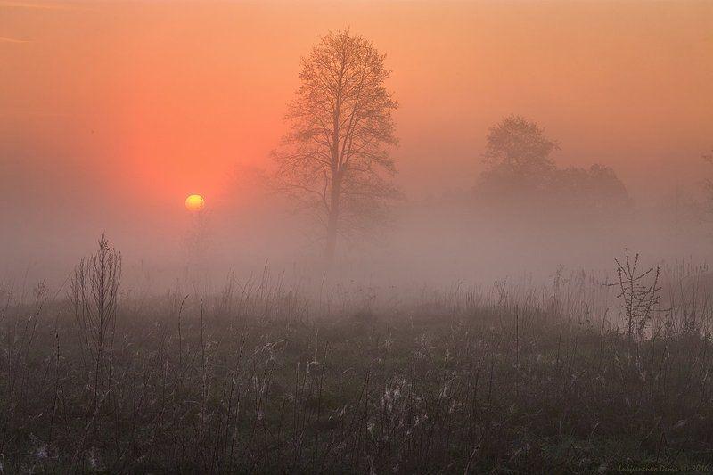2016, весна, деревья, паутина, рассвет, солнце, туман, утро ***photo preview