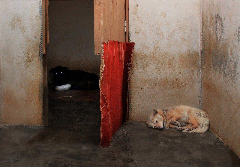 собаки, животные, приют Дом  разбитых сердецphoto preview