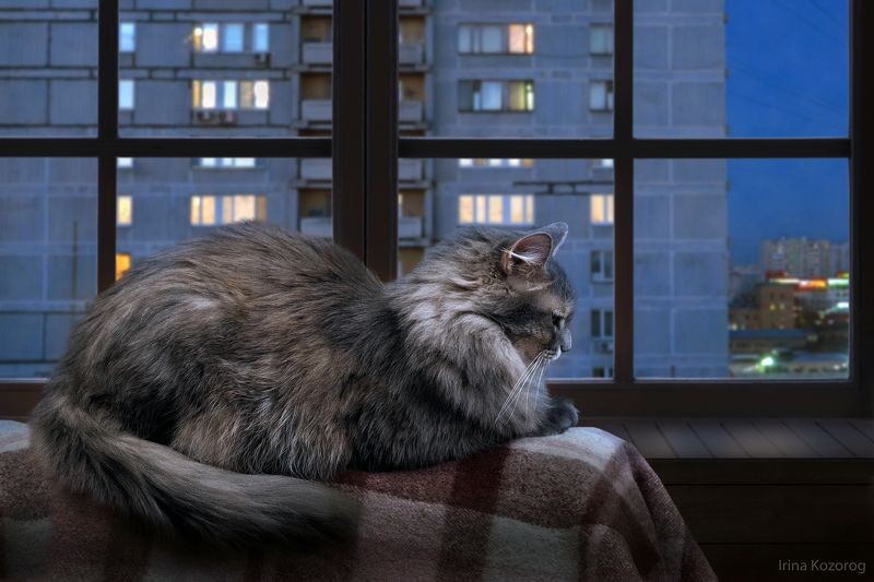 Кот, Ночь Ждет...photo preview