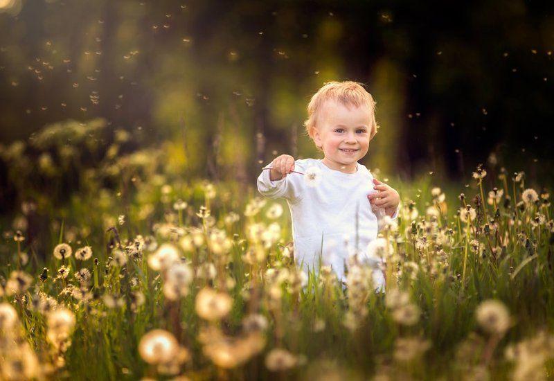 dandelions, dandelion, child , portrait, people, poland, nature Dandelions !photo preview