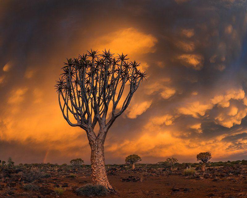 африка, намибия Алоевый Лес Юга Намибииphoto preview