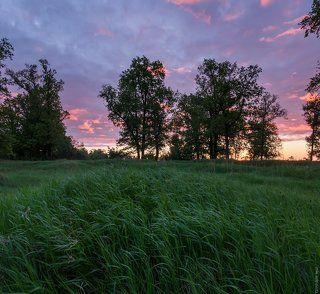 Ранее-ранее майское утро в свежей траве и среди дубов.