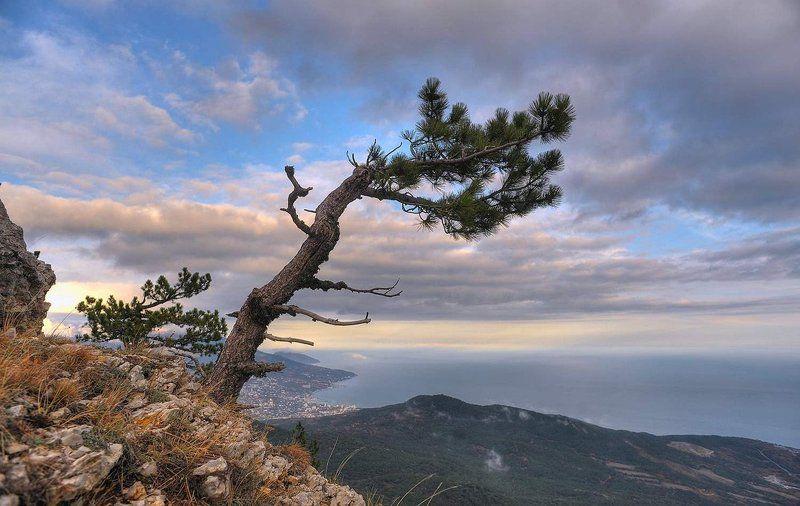 крым, дерево, сосна, облака над облакамиphoto preview