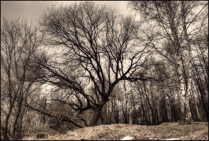 деревья, пасмурно, весна Вот и кончилась зима.. Может быть зря?photo preview
