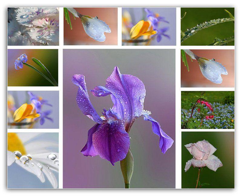 весна, краски, настроение Весеннее настроениеphoto preview